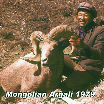 Argali from Mongolia