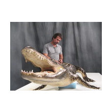 Mounting a Alligator on a carved body