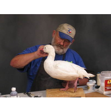 Mounting a Standing  Goose with Tony Finazzo