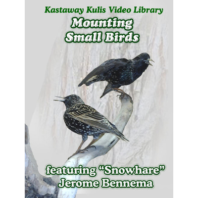 Mounting small birds with Snowhare